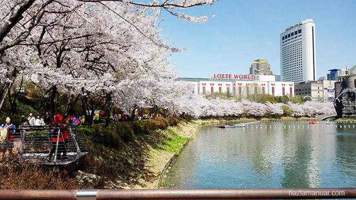 Seokchon Lake Cherry Blossom