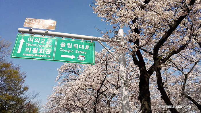 Yeouido Park cherry blossom